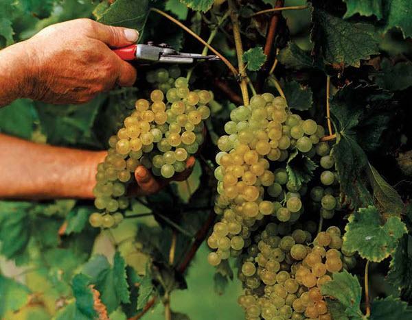 Wine Tips Promotional Calendar Vintages Storage And