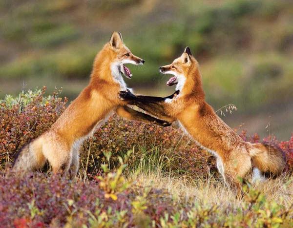 Wildlife Calendars Personalized North American Wildlife