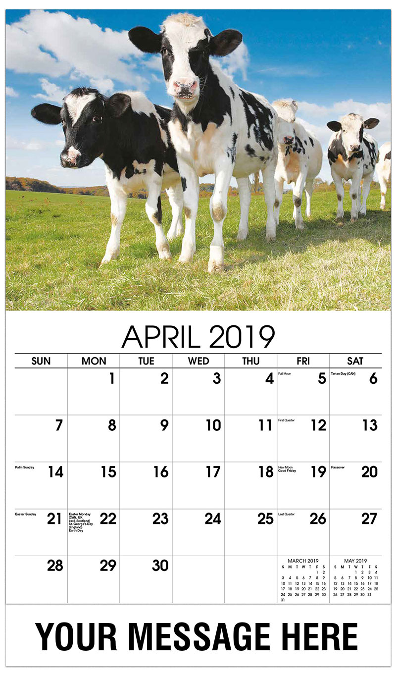 2019 Promo Calendar - Young Calves and Cows on the Field - April