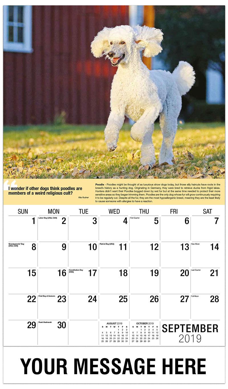 2019 Promo Calendar - Standard Poodle - September
