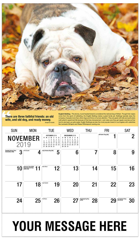2019 Promo Calendar - English Bulldog - November