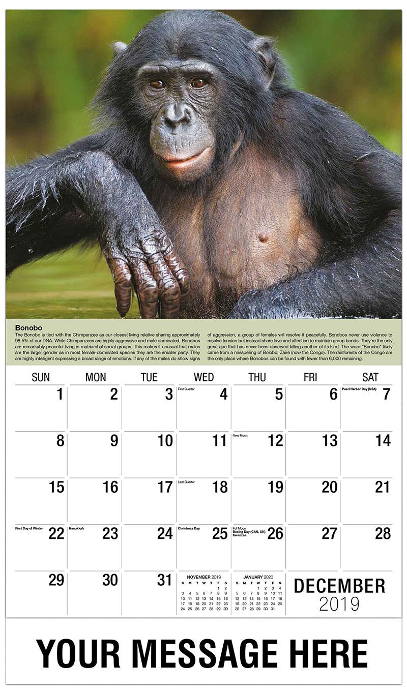 international wildlife business promo calendar
