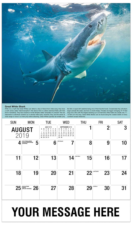 2019 Business Advertising Calendar - Shark - August