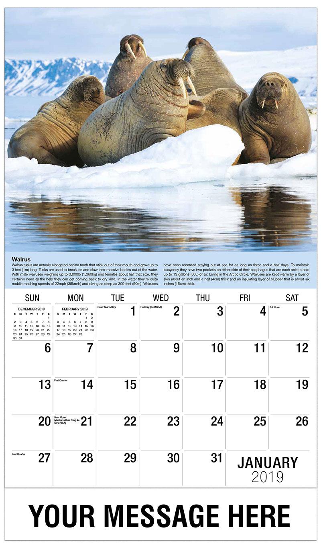 2019 Promo Calendar - Walrus - January