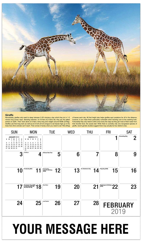 2019 Promo Calendar - Two Giraffes - February