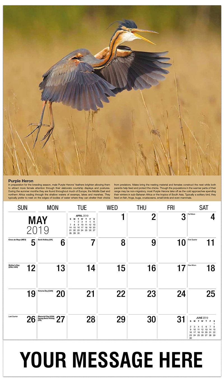 2019 Promotional Calendar - Purple Heron - May