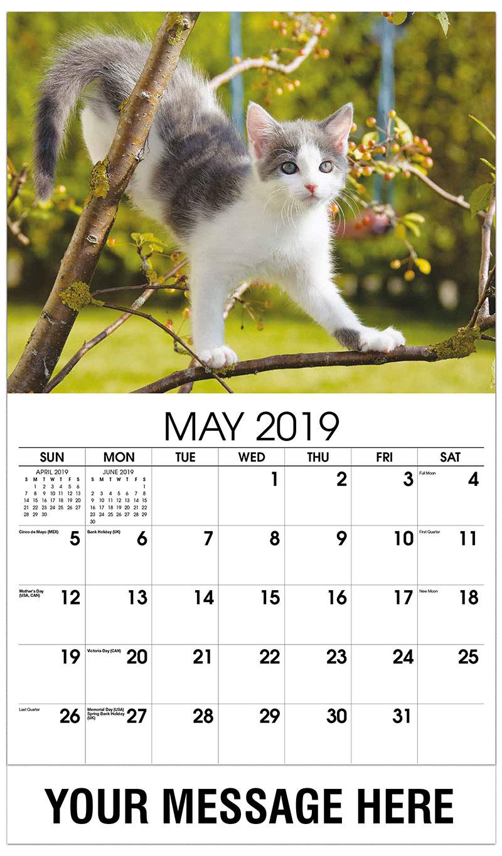 2019 Promo Calendar - Kitten in Tree - May
