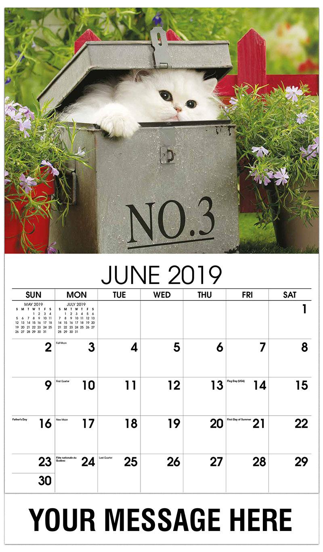 2019 Promo Calendar - White Kitten in Box - June