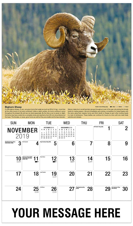 2019 Advertising Calendar - Bighorn Sheep Ram - November