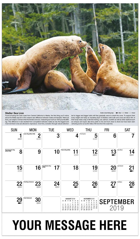 2019 Business Advertising Calendar - Steller's Sea Lion - September