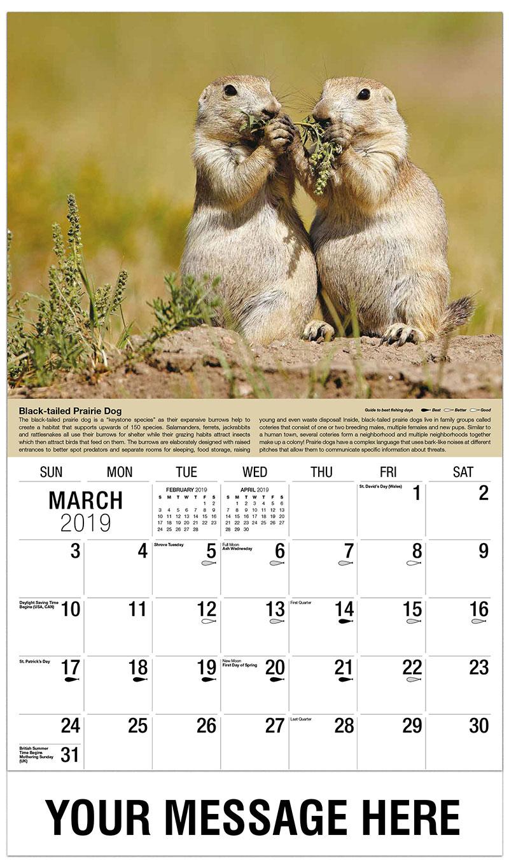2019 Promo Calendar - Prairie Dog - March