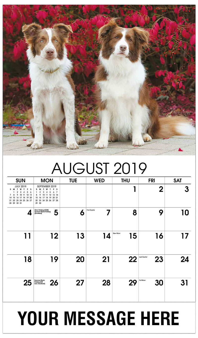 2019 Business Advertising Calendar - Two Border Collies - August