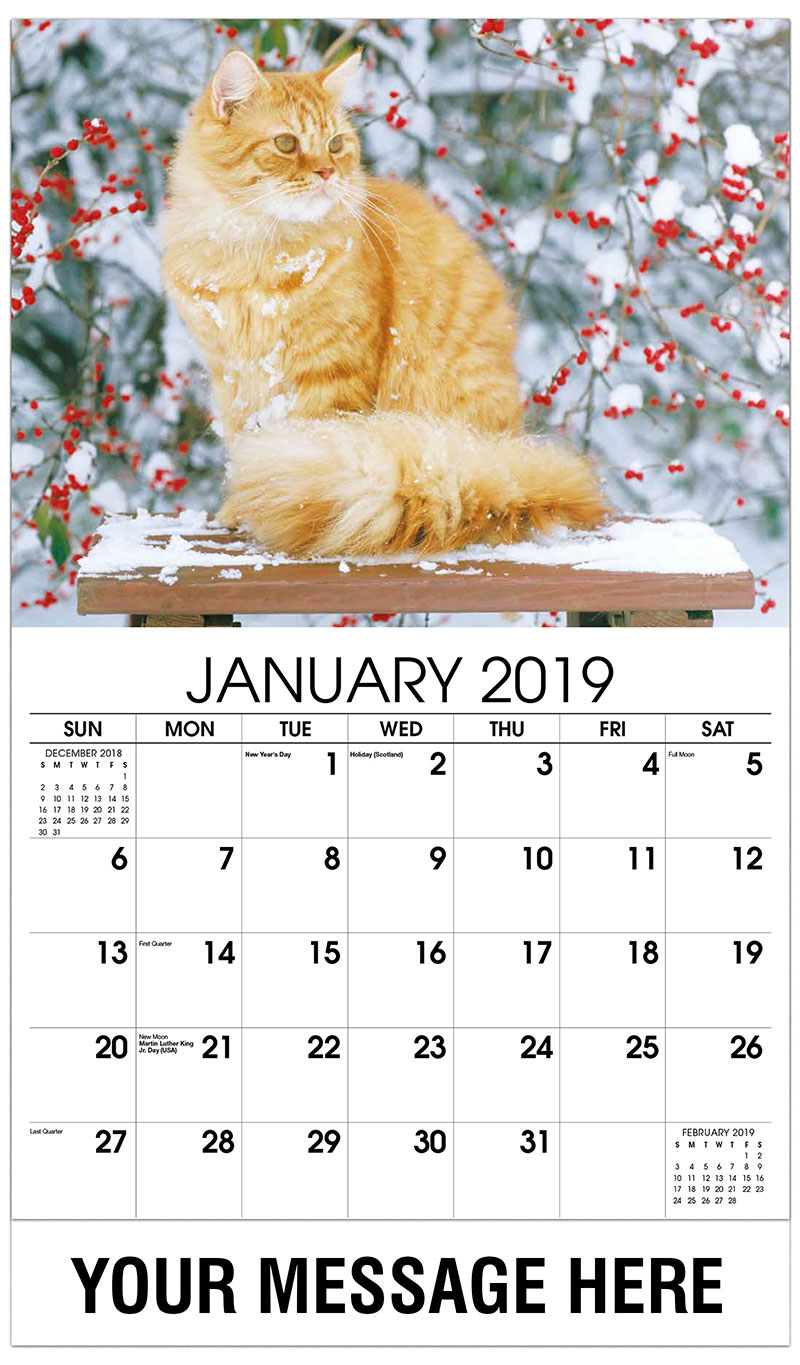 2019 Promotional Calendar - Orange Cat - January