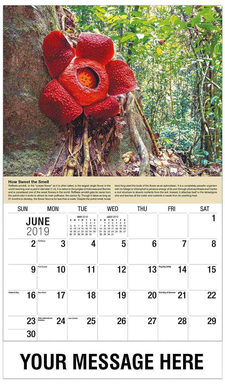 planet earth promotional calendar