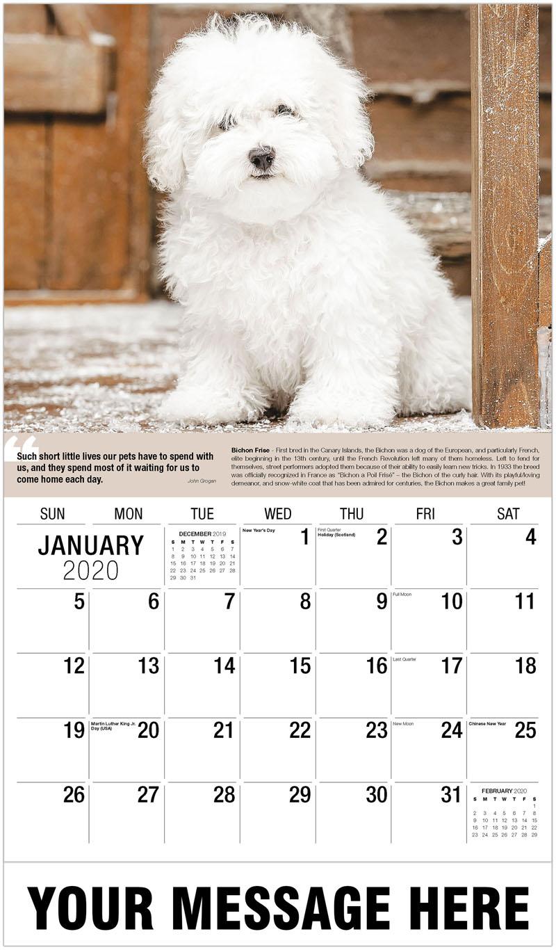 2020 Advertising Calendar - Bichon Frise - January