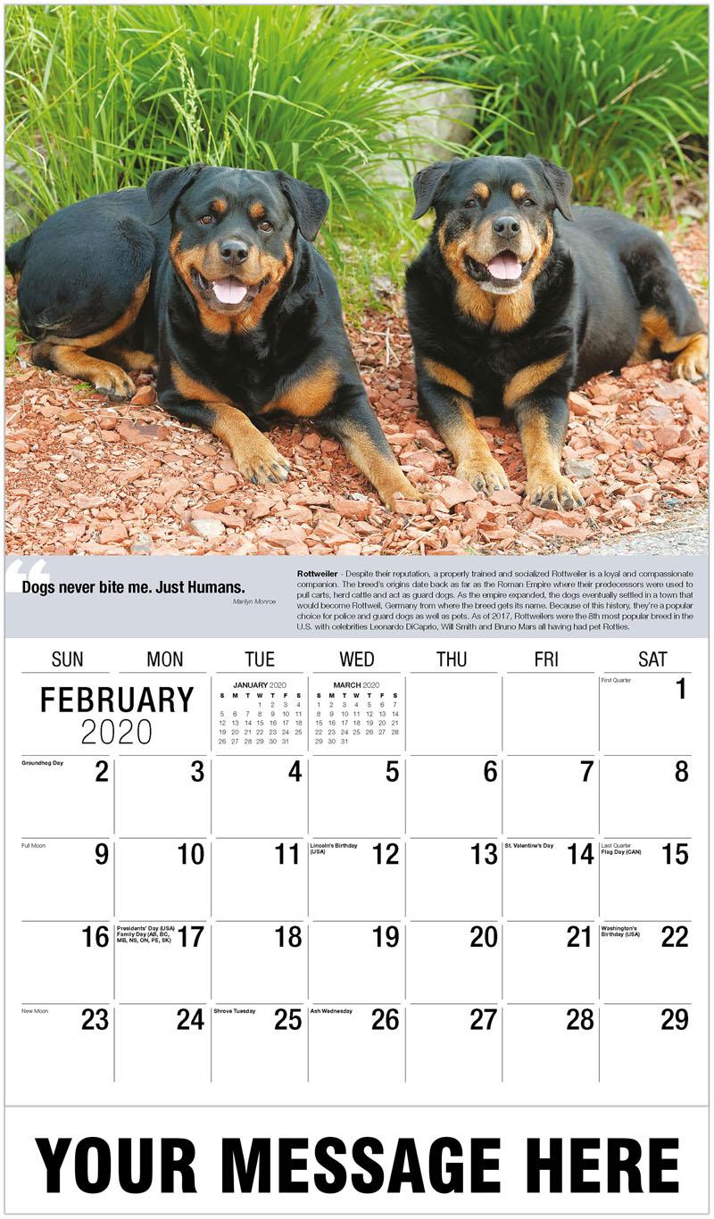 2020 Advertising Calendar - Rottweiler - February
