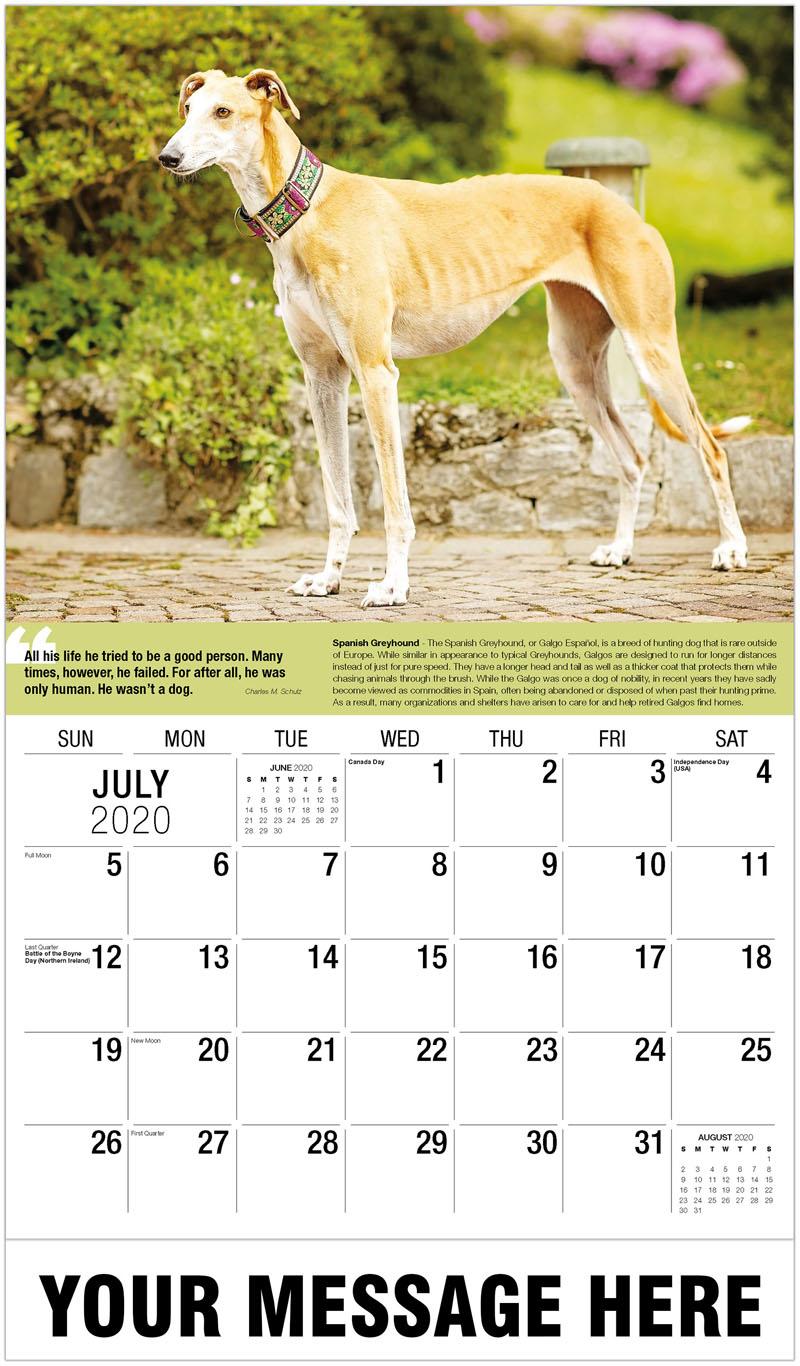 2020 Business Advertising Calendar - Spanish Greyhound - July