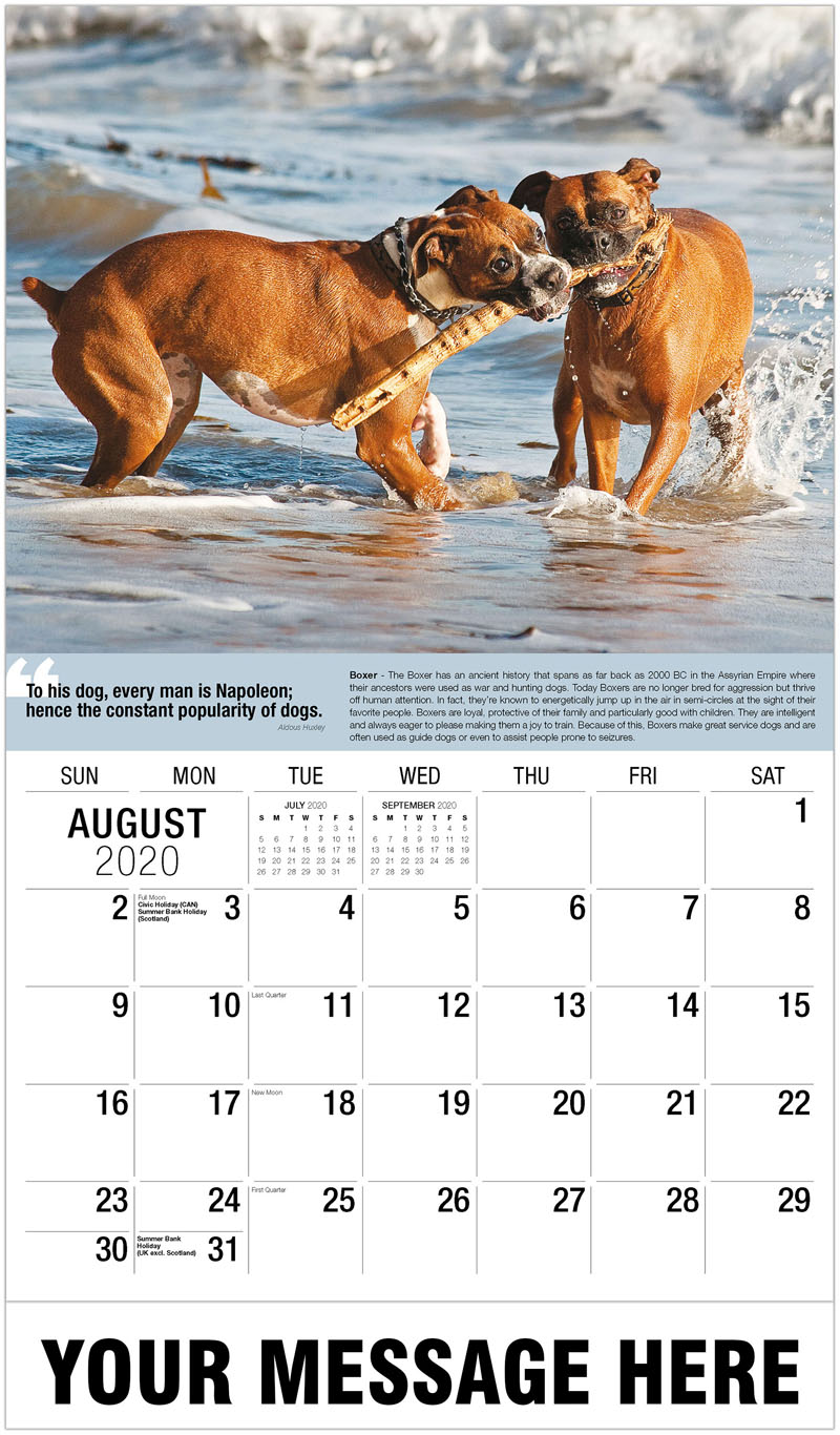 2020 Business Advertising Calendar - Boxer Dogs - August