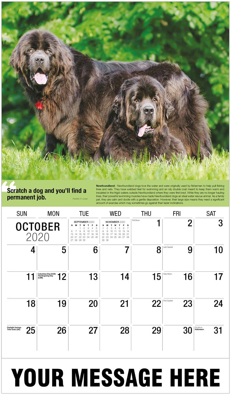 2020 Promo Calendar - Newfoundland Dogs - October