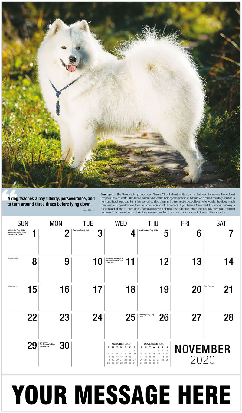 2020 Promo Calendar - White Samoyed Dog - November