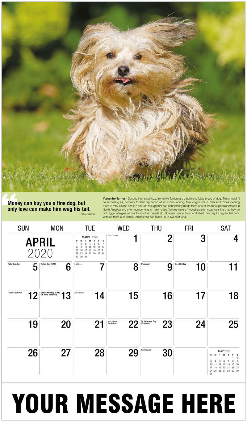 2020 Promotional Calendar - Yorkshire Terrier - April