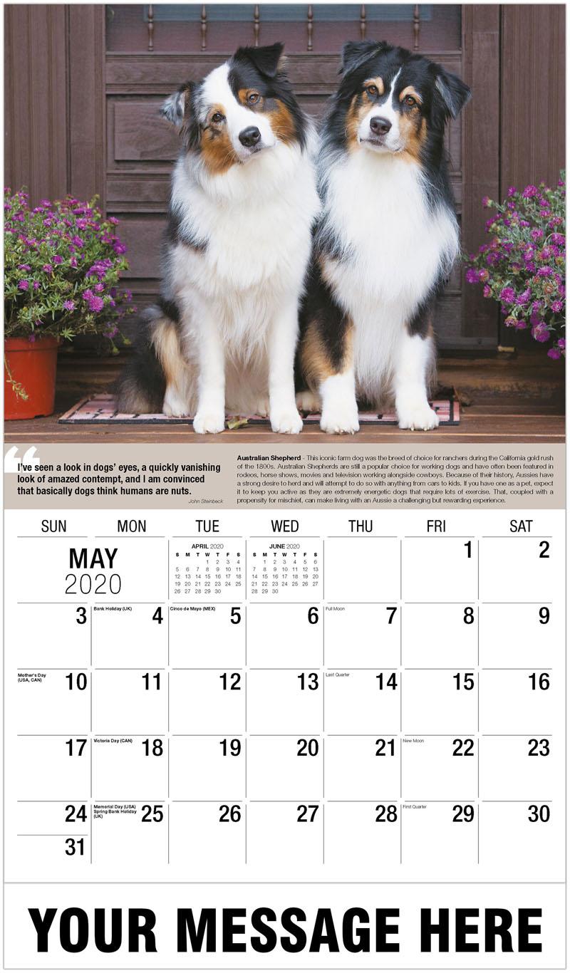 2020 Promotional Calendar - Australian Shepherd - May