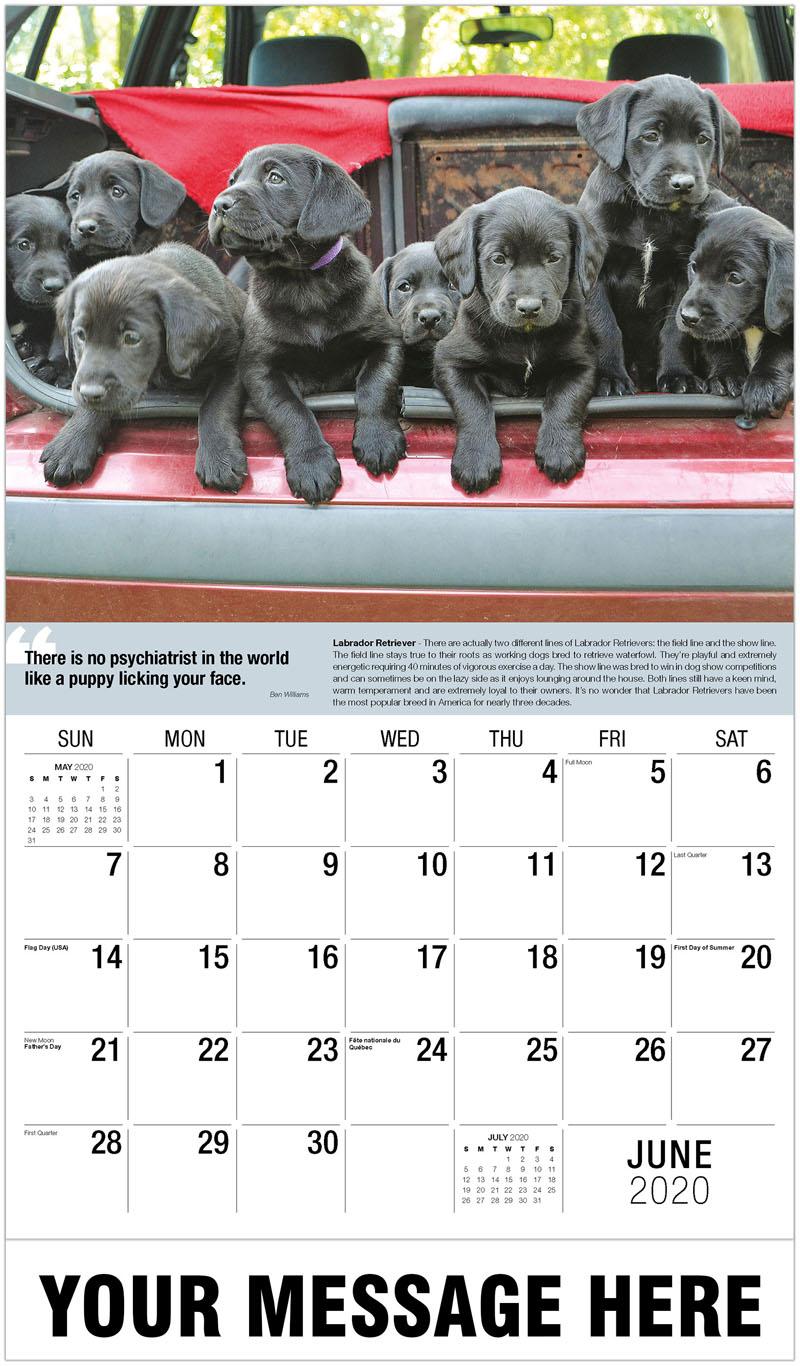 2020 Promotional Calendar - Black Labrador Puppies - June