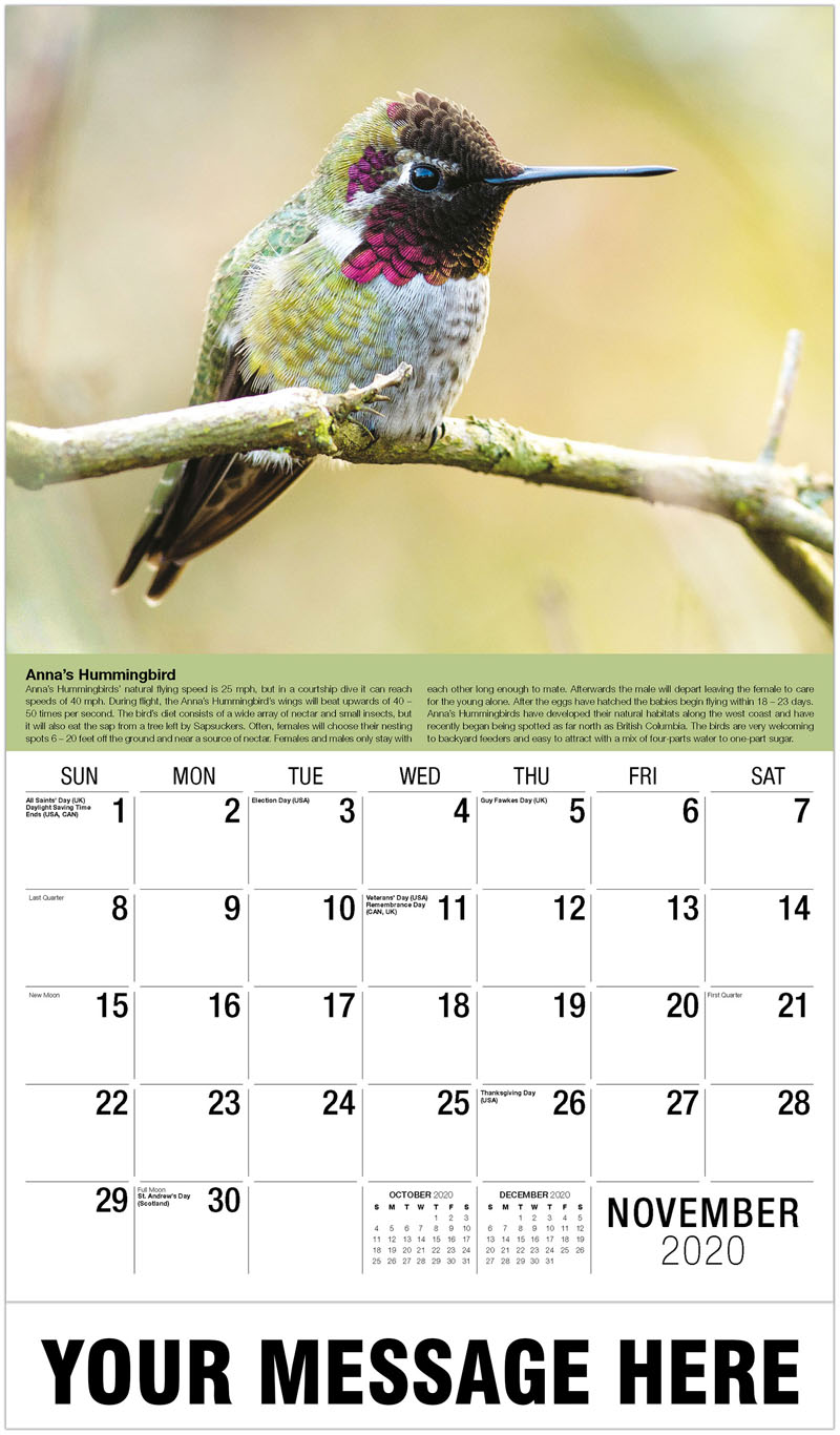 2020 Advertising Calendar - Orchard Oriole - November