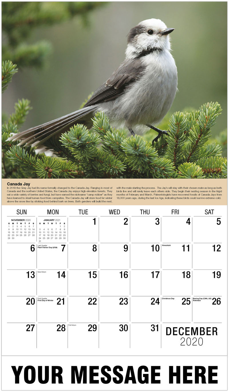 2020 Advertising Calendar - Anna'S Hummingbird - December_2020