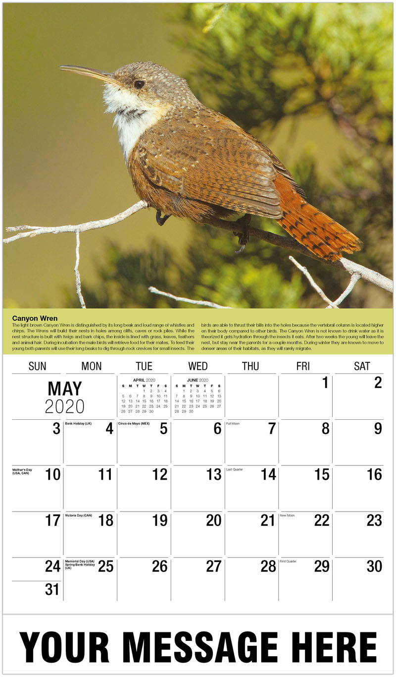 2020 Promo Calendar - Cape May Warbler - May