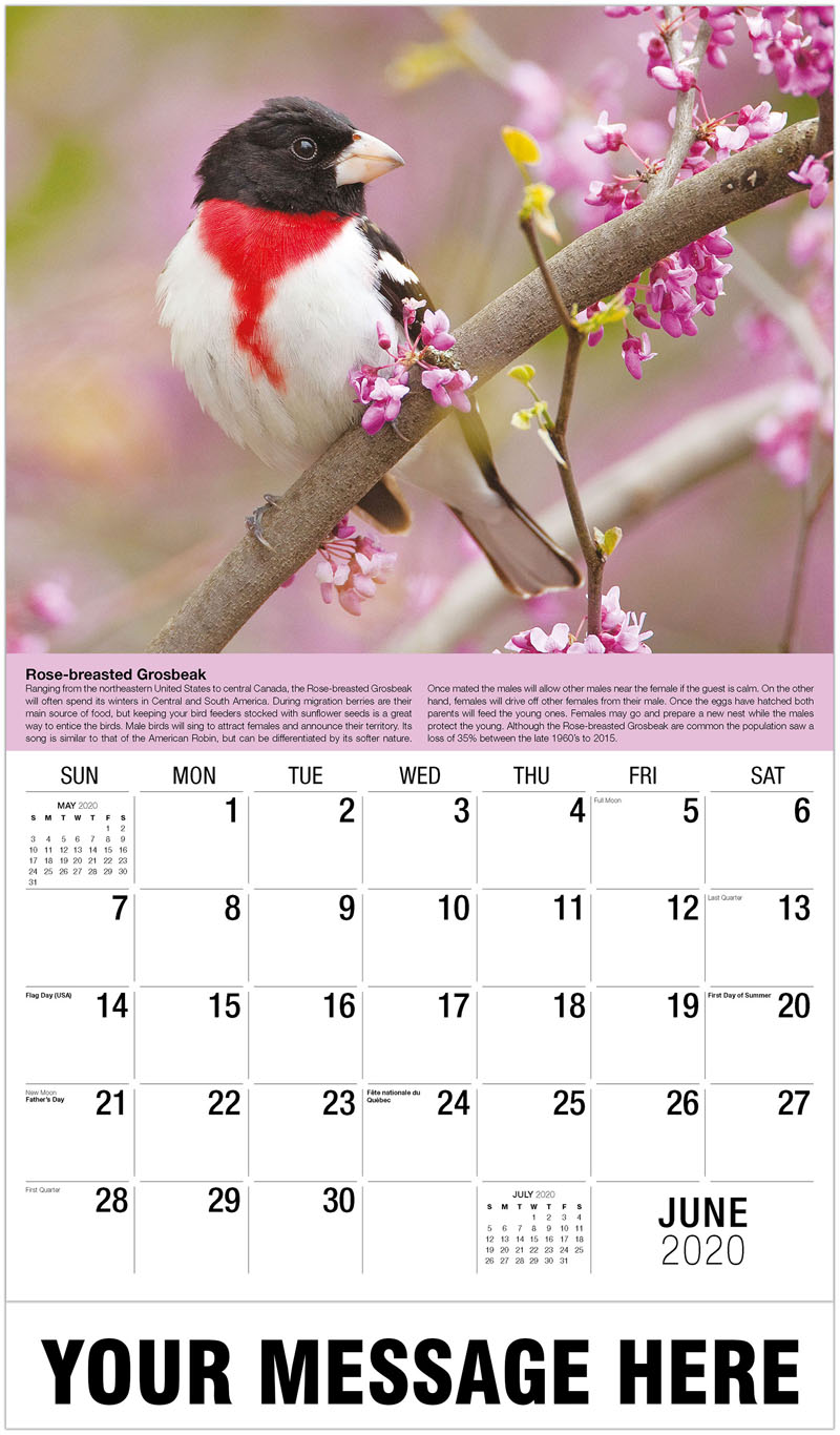 2020 Promo Calendar - Canyon Wren - June