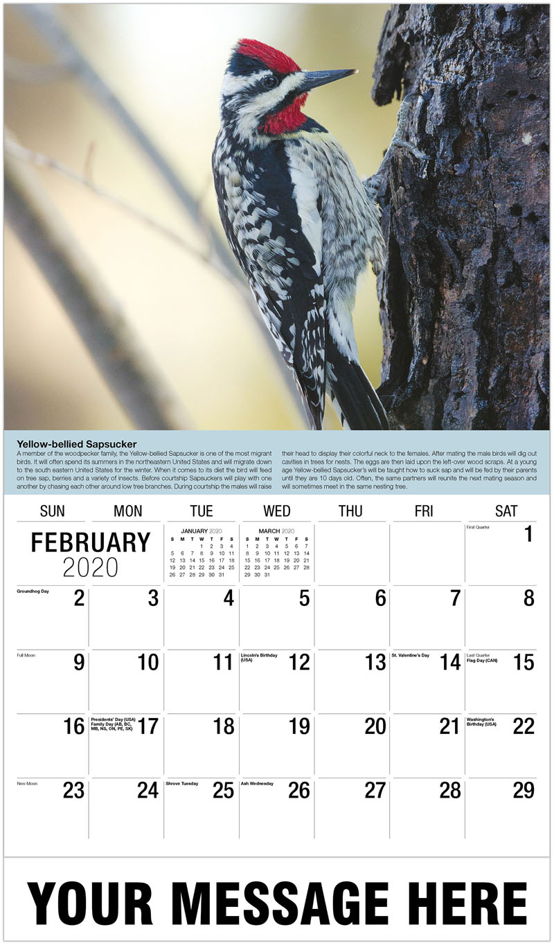 2020 Promotional Calendar - Black Rosy-Finch On Snow - February