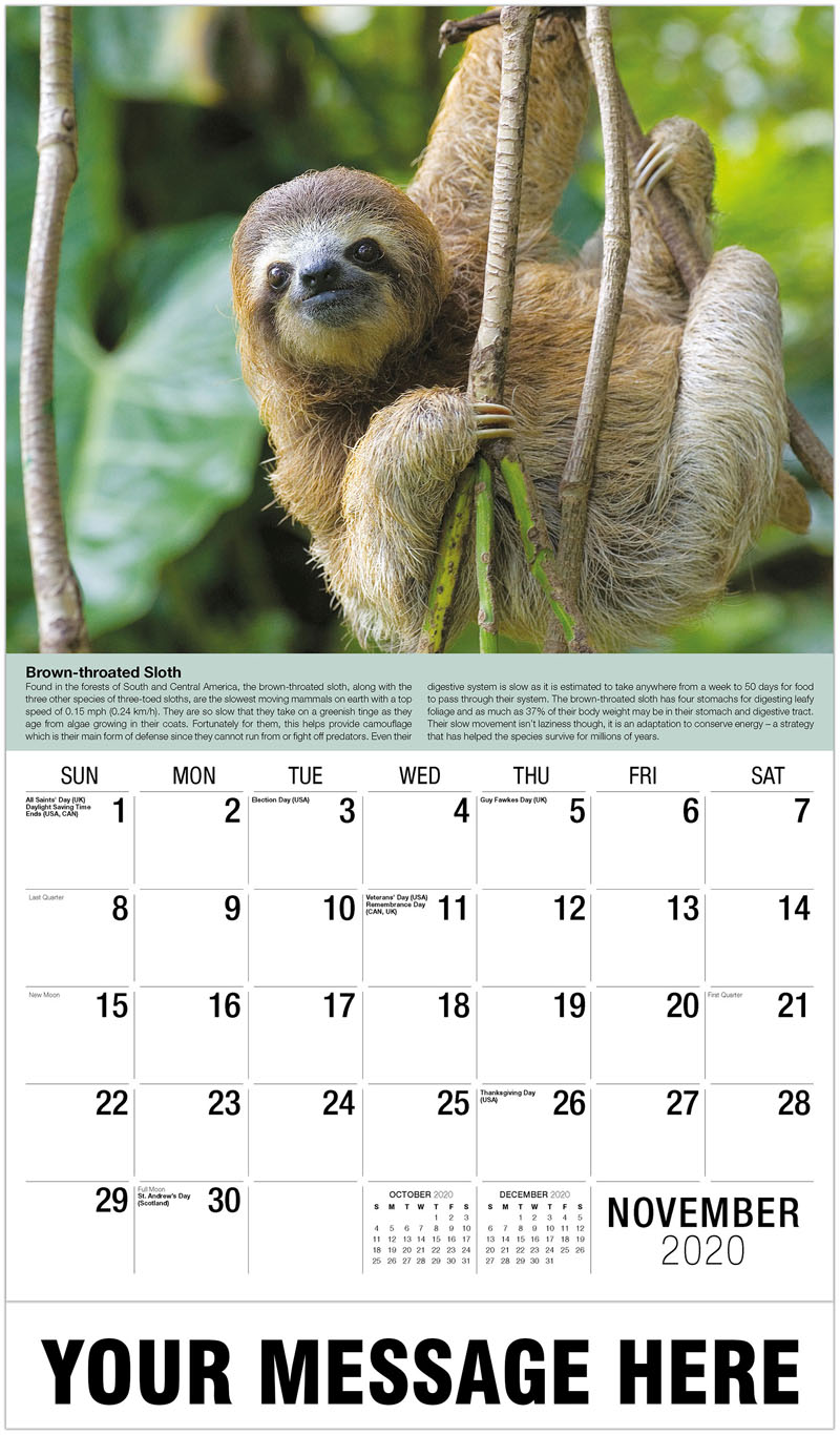 2020 Advertising Calendar - A Young Brown-Throated Three-Toed Sloth - November