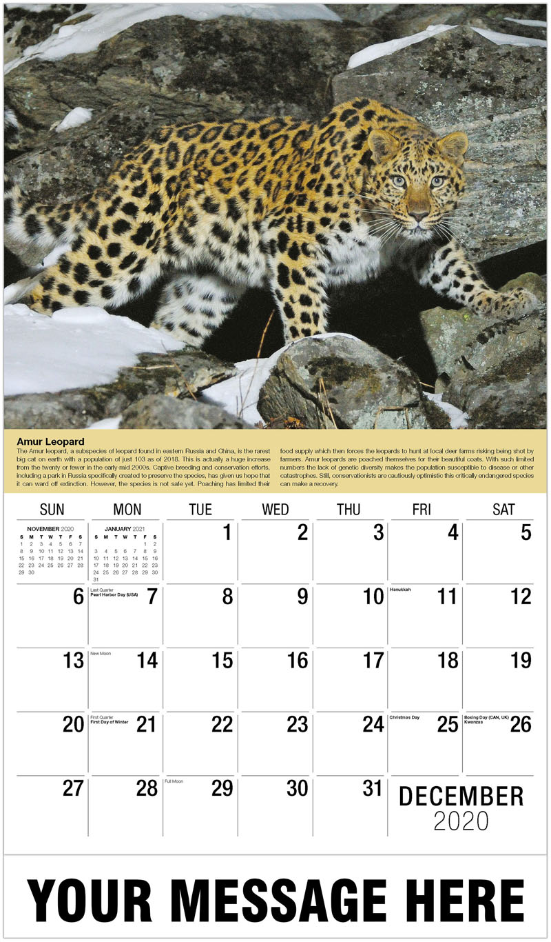 2020 Advertising Calendar - Wild Female Amur Leopard - December_2020