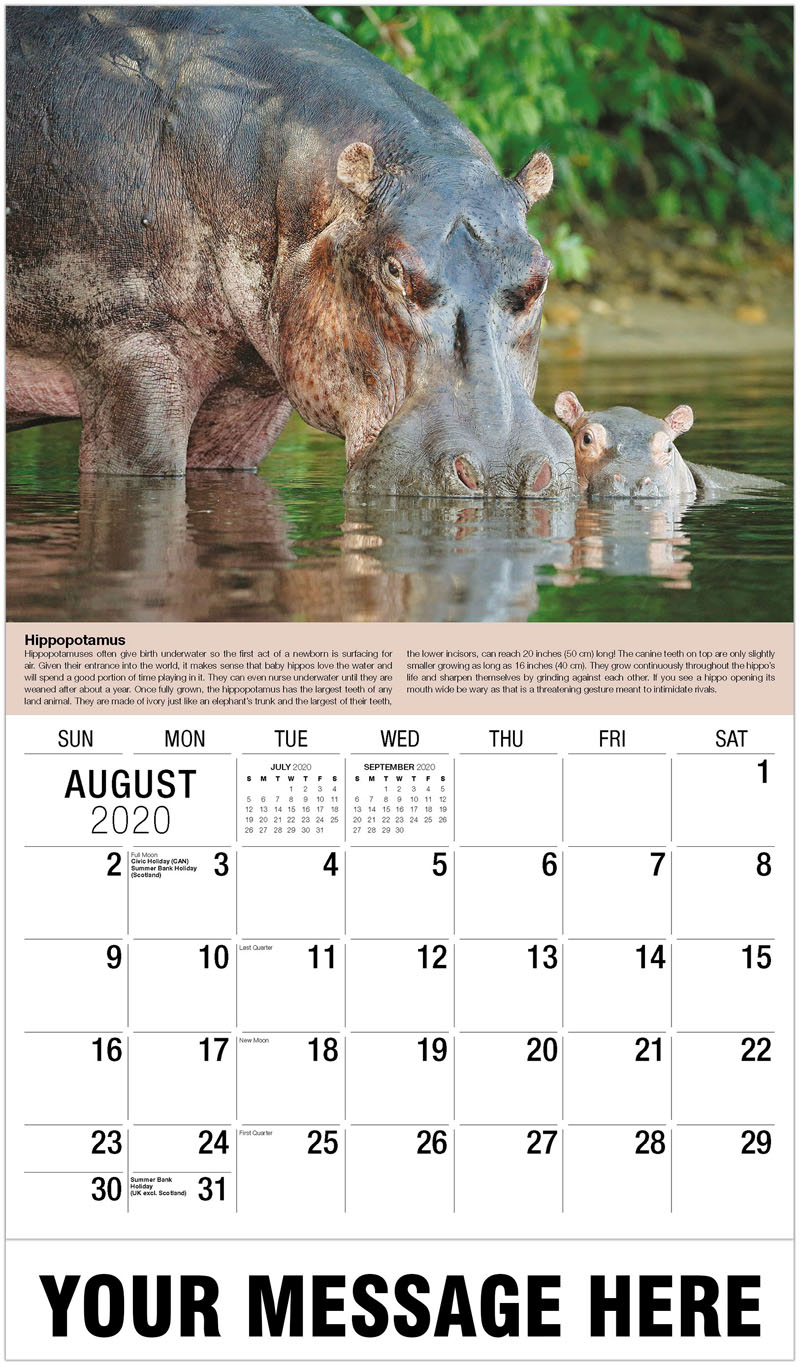 2020 Business Advertising Calendar - Steven Ruiter – Minden Pictures - August