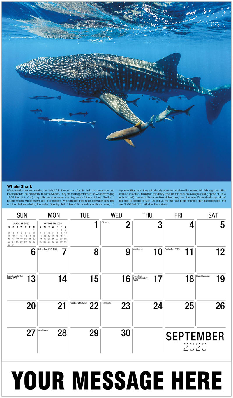 2020 Business Advertising Calendar - Suckerfish, Sharksuckers And Cobia - September