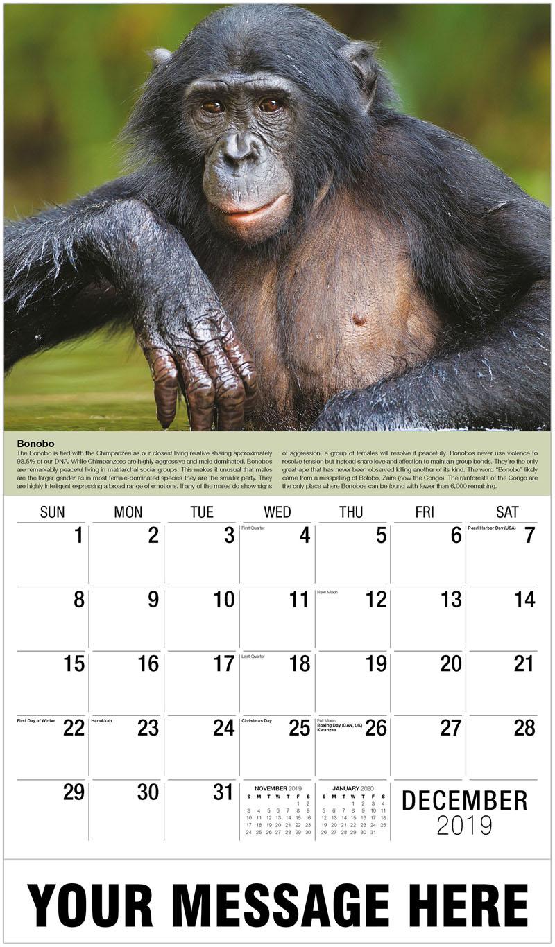 2020 Promo Calendar - Bonobo - December_2019