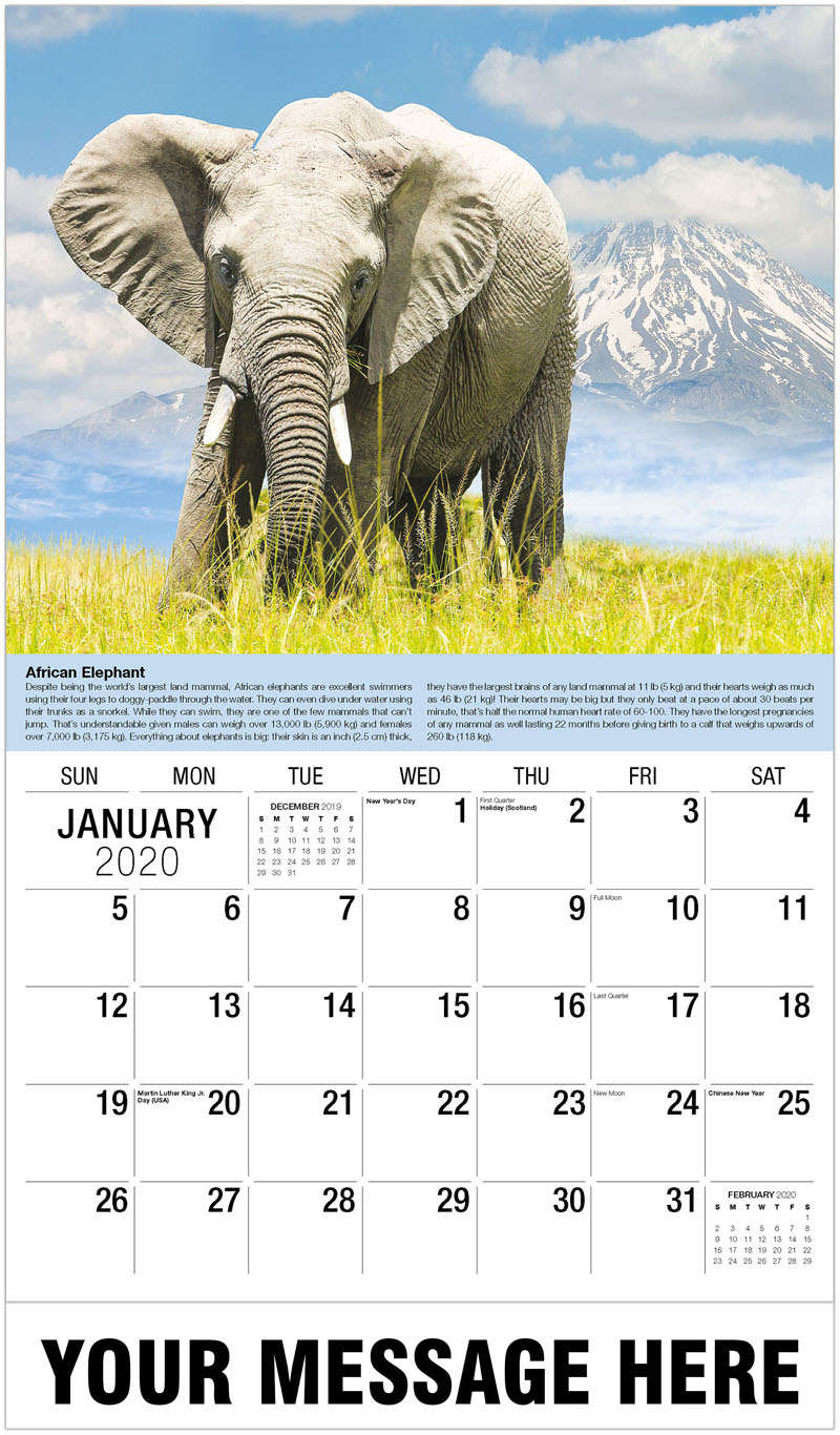 2020 Promo Calendar - African Elephant And Mountain - January
