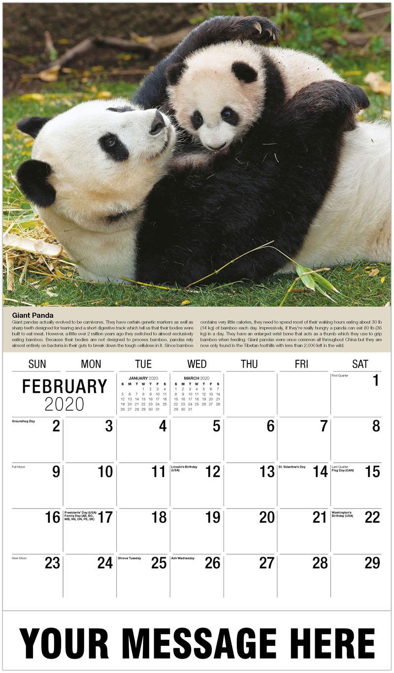 2020 Promo Calendar - Giant Panda - February