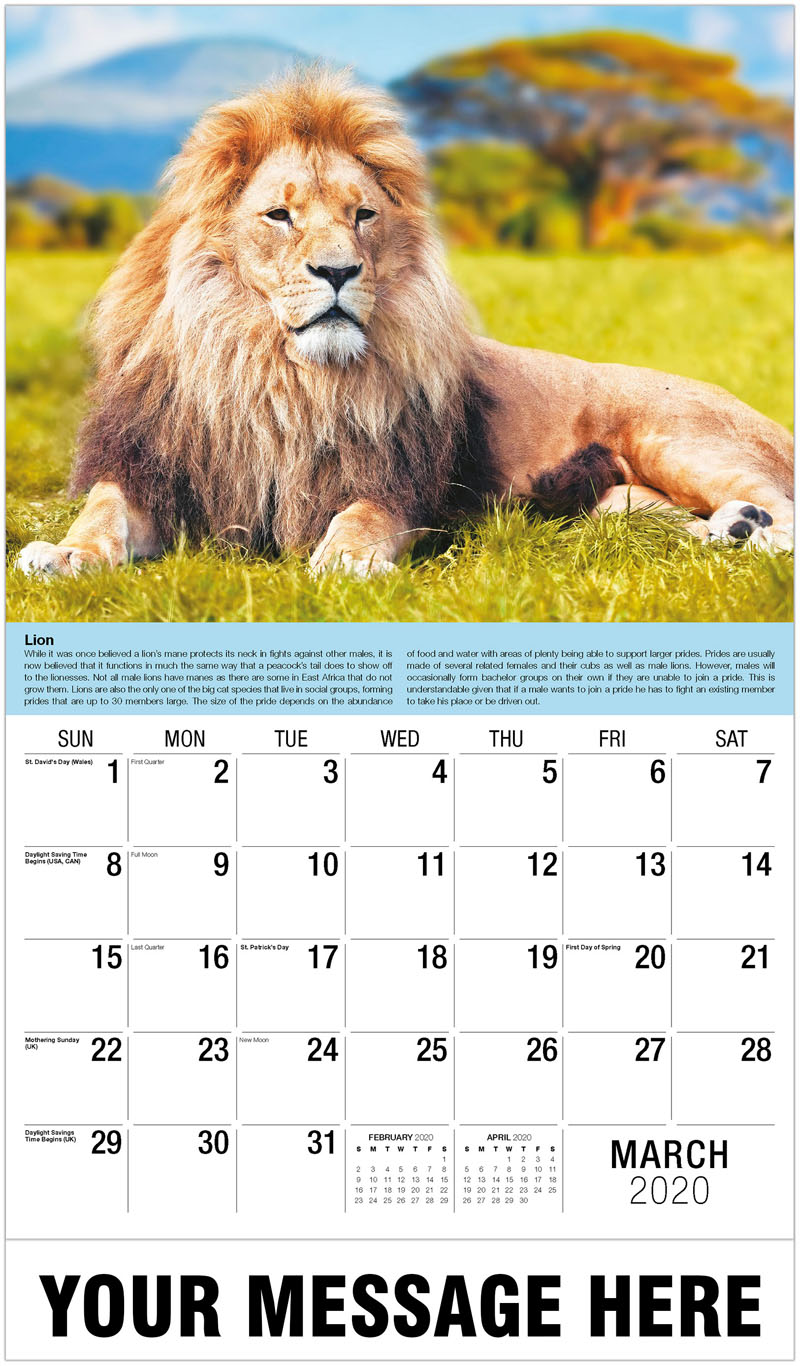 2020 Promotional Calendar - Lion Lying On Grass Against Sky - March