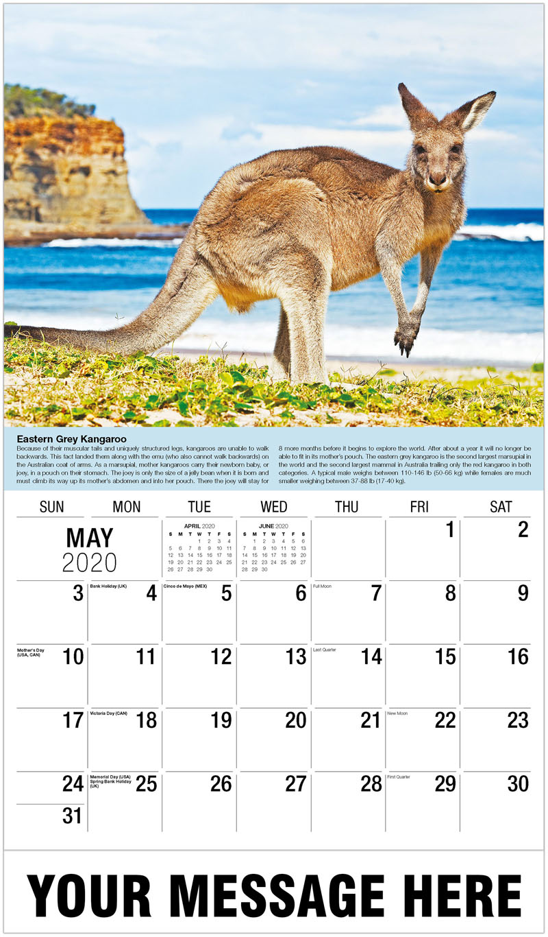 2020 Promotional Calendar - Kangaroo By The Sea - May