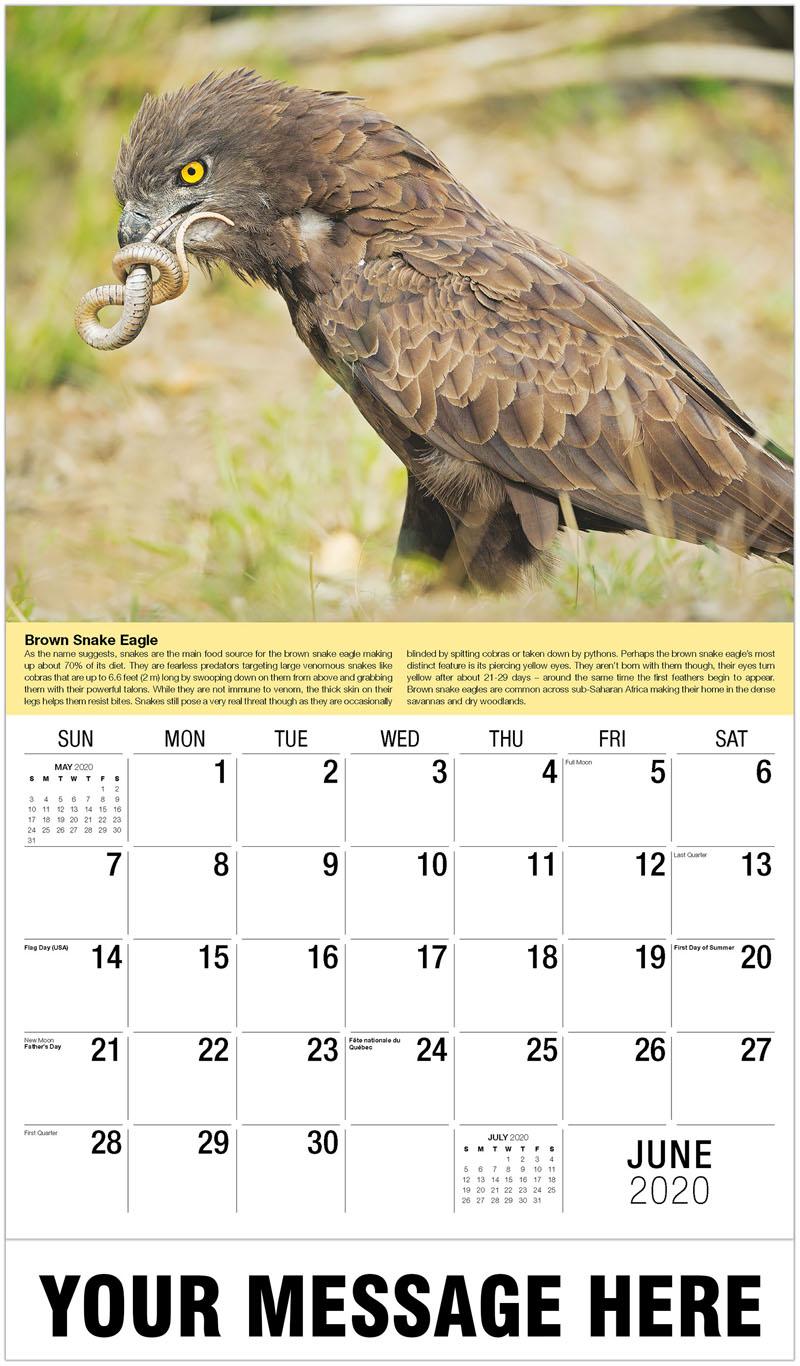 2020 Promotional Calendar - Snake Eagle Eats A Snake On The Grass - June