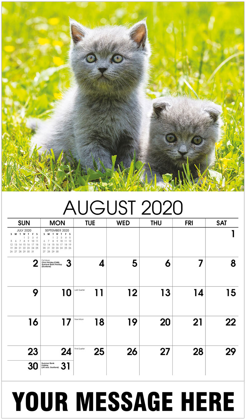 2020 Business Advertising Calendar - Portrait Of British Shorthair Cats - August