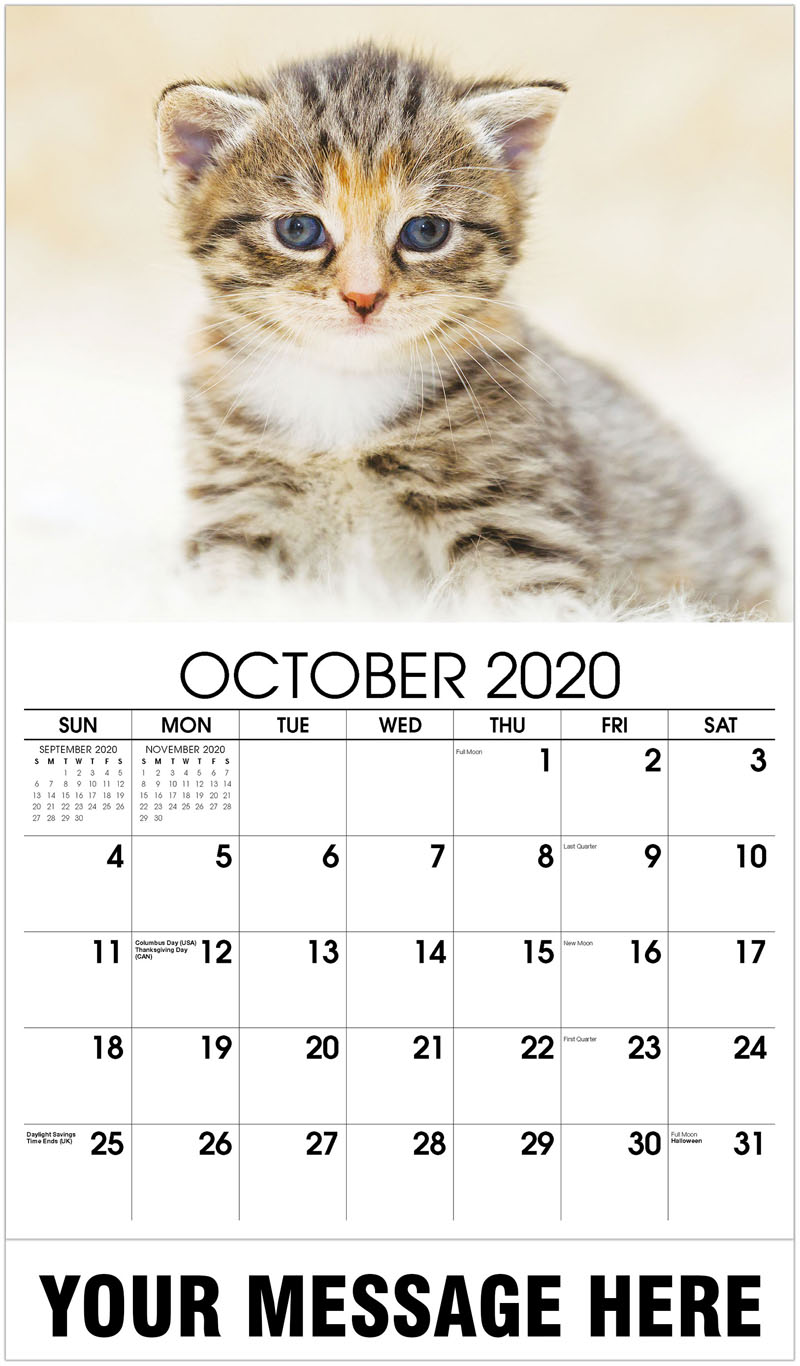 2020 Business Advertising Calendar - Kitten Sitting On Fur - October