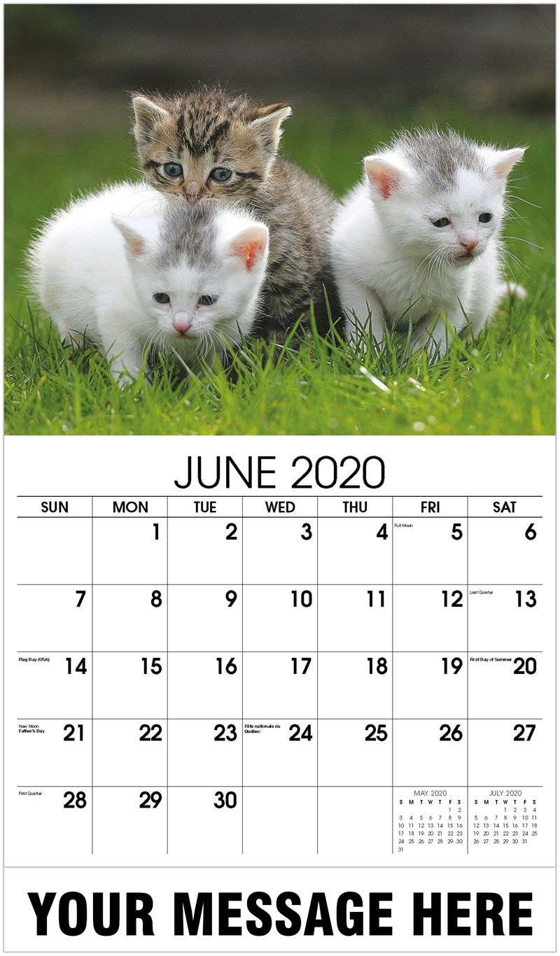 2020 Promo Calendar - 3 Kittens On A Lawn - June