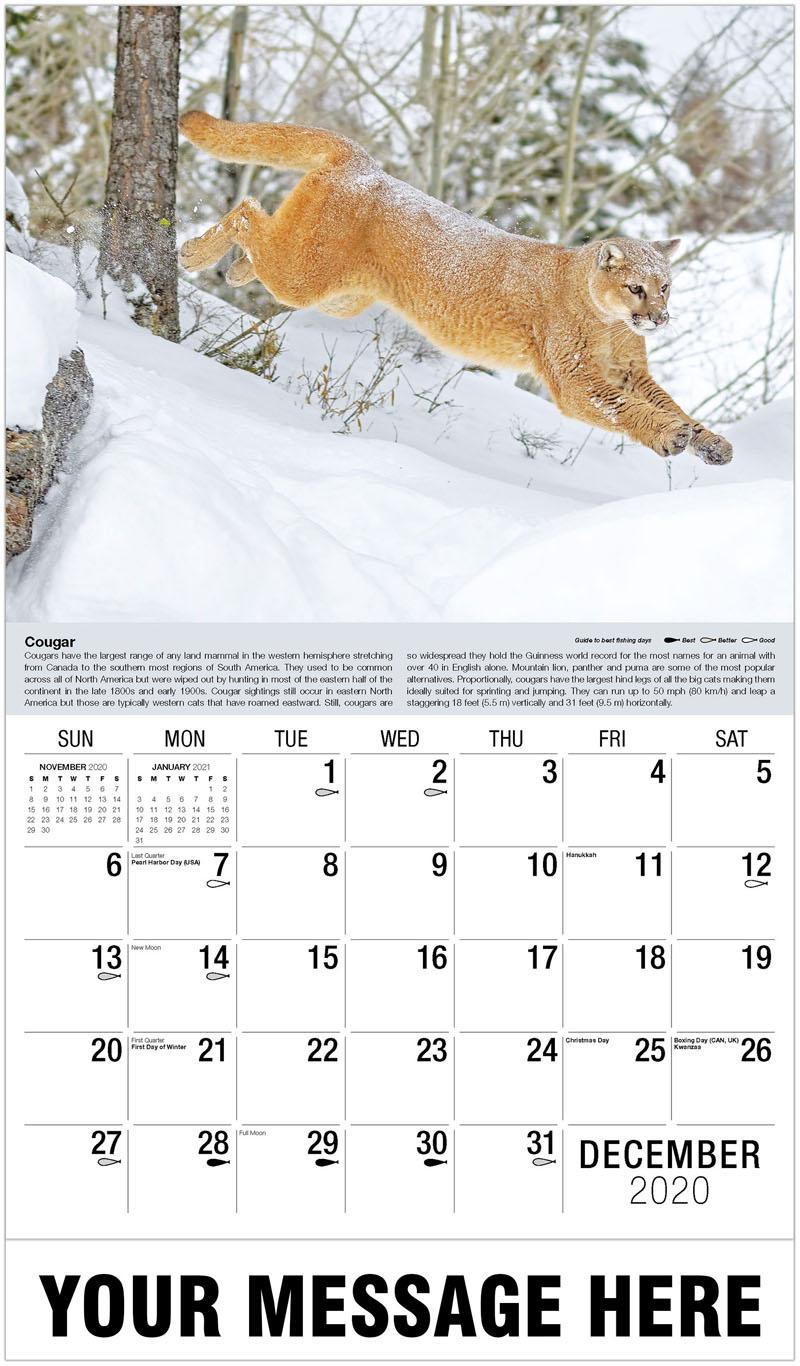 2020 Advertising Calendar - Mountain Lion In Winter - December_2020