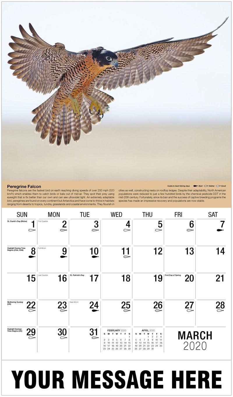 2020 Promo Calendar - Peregrine Falcon - March