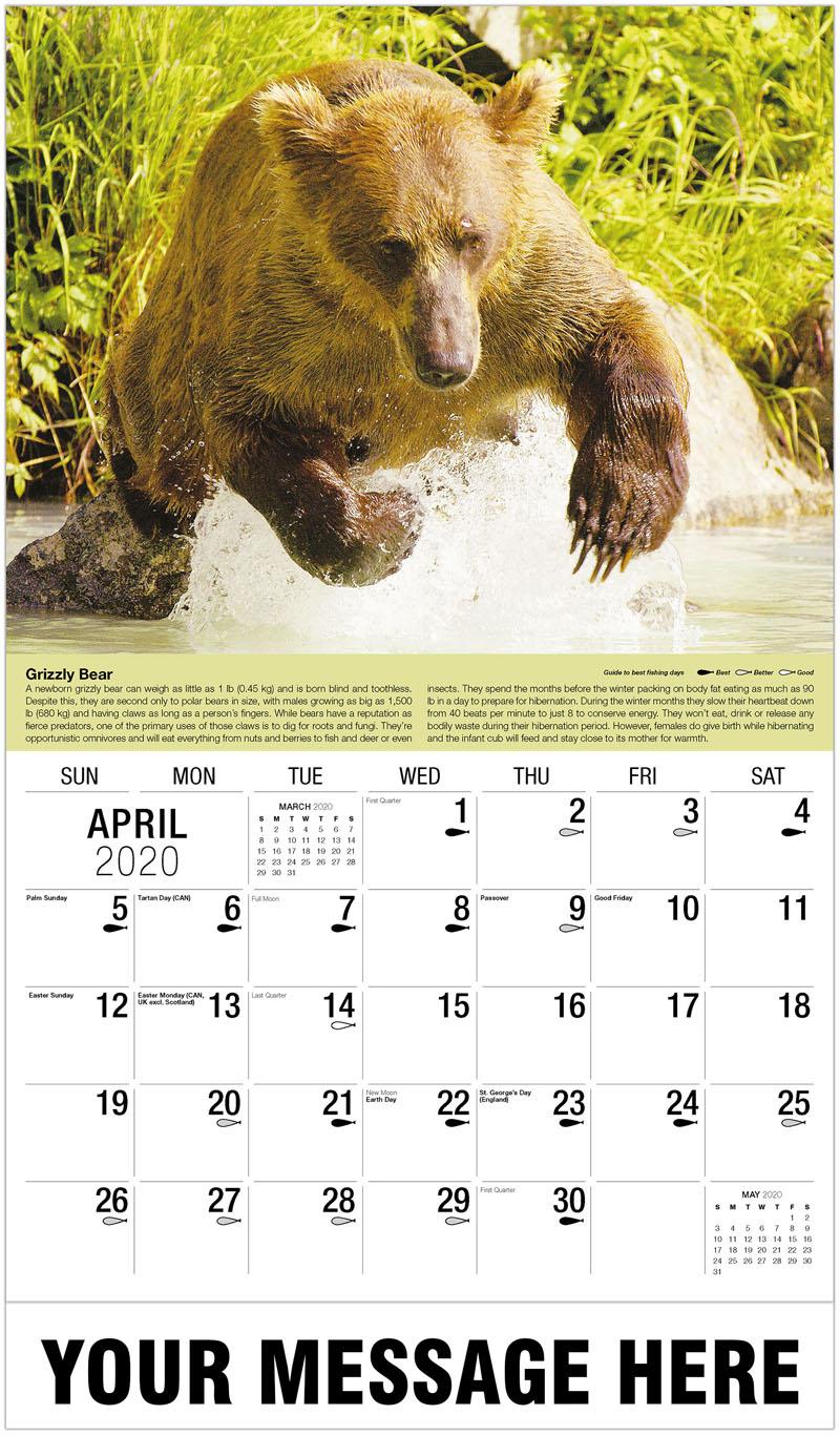2020 Promo Calendar - Brown Bear Fishing - April