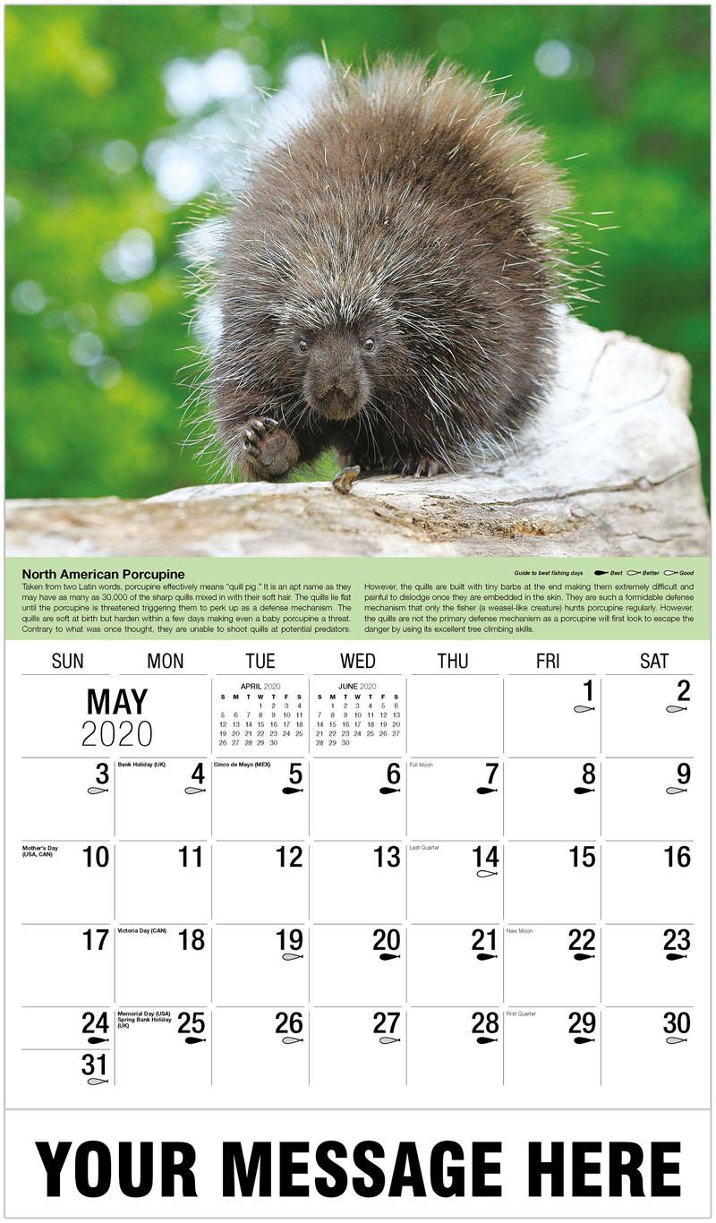2020 Promo Calendar - Porcupine - May