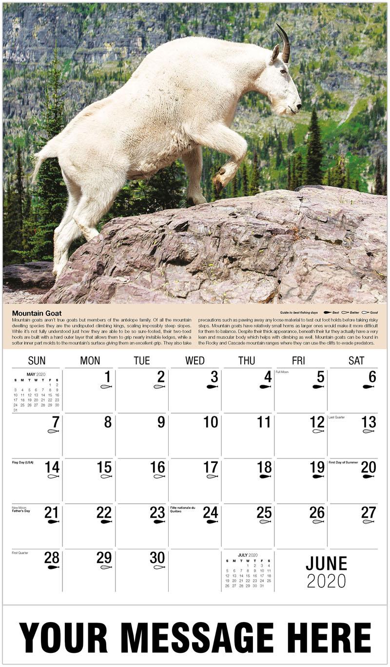 2020 Promo Calendar - Mountain Goat - June